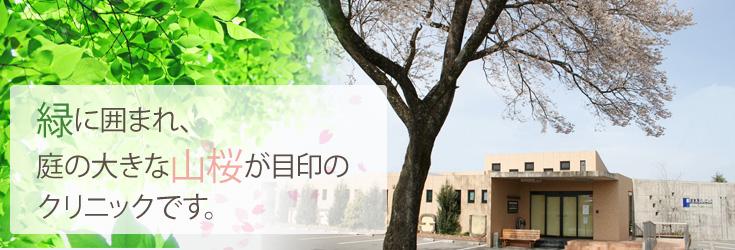 緑に囲まれ、庭の大きな山桜が目印のクリニックです。